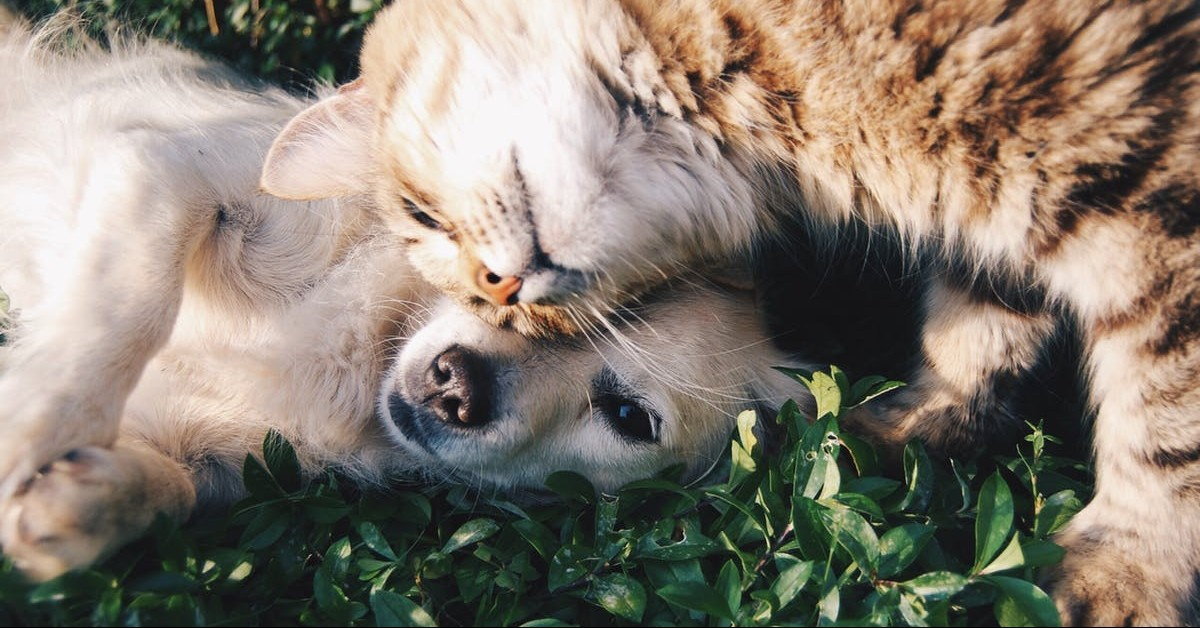Dos and Don'ts of Moving with Pets